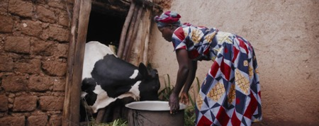 Esperance feeding her family's cow. The nutritious milk from this cow helps feed her kids, plus gives her the ability to sell any surplus for added income.  (©2018 World Vision)