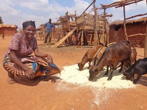 Malawi Better